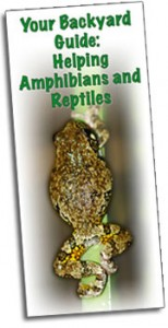 Your Backyard Guide to Helping Amphibians and Reptiles